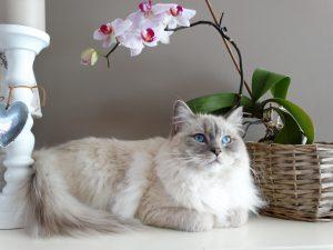 Como fazer mudança com o gato