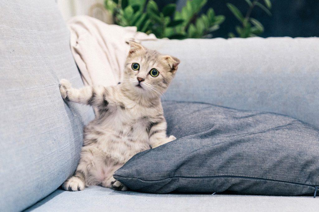 Como fazer mudança com o gato_estresse