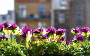 Como montar um jardim de flores na sua casa